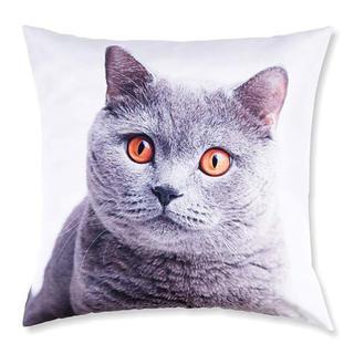 Dekoratívna obliečka na vankúšik Britská mačka