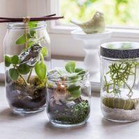 Záhradky v pohároch